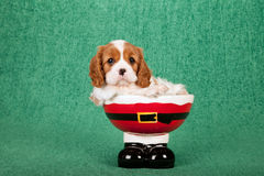 De arrogante het puppyzitting van Koningscharles spaniel binnen de laarzen van de santabroek werpt op groene achtergrond Royalty-vrije Stock Foto's
