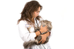 De arts van het huisdier Stock Foto