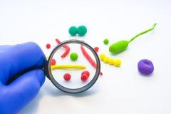 De arts of de wetenschapper onderzoeken door vergrootglas vergroot model van bacteriën, enig-cellige organismen, kokken, vibrios, royalty-vrije stock afbeelding