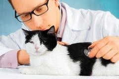 De artsendierenarts luistert een kat Royalty-vrije Stock Foto's