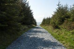 De asfaltweg binnen - tussen rijen van bomen Stock Foto