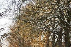 De atmosfeer van de winter Stock Fotografie
