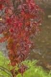 De atmosferische herfst Royalty-vrije Stock Afbeelding