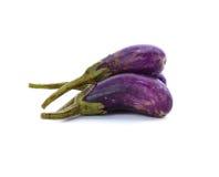 De aubergine verwelkt Stock Afbeelding