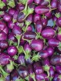 De aubergines van de baby Stock Foto's