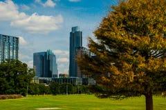 De Austin Texas Grass Park as cores do centro da queda do pinheiro próximo fecham-se acima Imagens de Stock Royalty Free