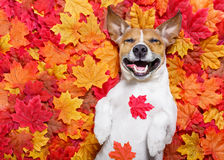 De Autmndaling verlaat hond stock afbeelding