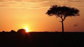 De auto gaat op savanne bij zonsopgang stock video