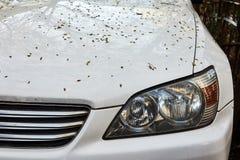 De auto` s bonnet wordt uitgestrooid met gevallen bladeren stock fotografie