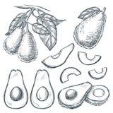 De avocado op tak en vruchten plakken, schetst vectorillustratie Hand getrokken geïsoleerde ontwerpelementen royalty-vrije illustratie