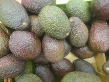 De avocado verwijst naar de Avocado ook boom` s fruit door, dat botanisch een grote bes die ??n enkel zaad bevatten is De avocado royalty-vrije stock fotografie