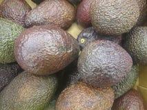 De avocado verwijst naar de Avocado ook boom` s fruit door, dat botanisch een grote bes die ??n enkel zaad bevatten is De avocado royalty-vrije stock afbeelding