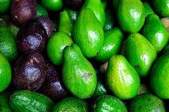 De avocado verwijst naar de Avocado ook boom` s fruit door, dat botanisch een grote bes is Ruwe Vruchten achtergrond Stock Fotografie