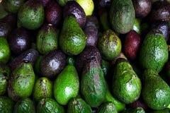 De avocado verwijst naar de Avocado ook boom` s fruit door Ruwe Vruchten achtergrond Stock Fotografie
