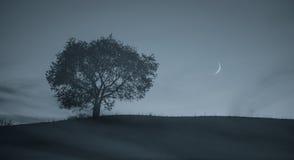 De avond van de enige boom Stock Foto