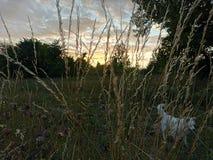 De avond van de zomer royalty-vrije stock afbeeldingen