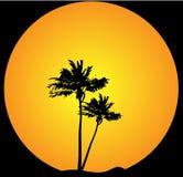 De avondachtergrond van de palm Royalty-vrije Stock Afbeeldingen