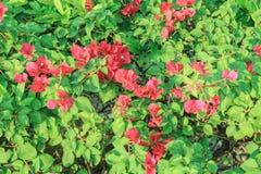 De avondbloemen stock fotografie