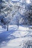 De avondlandschap van de winter Stock Afbeeldingen
