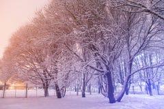 De avondscène van het de winterpark Bomen in sneeuw, landschap Stock Afbeeldingen