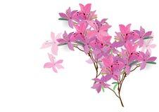 De azalea bloeit het hand getrokken geïsoleerde beeld van de waterverfborstel ontwerp voor voorwerp Stock Afbeelding