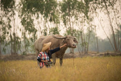 De Aziatische jonge dame zit naast buffels en greepradio stock foto