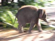 De Aziatische Olifant van de baby Stock Afbeeldingen