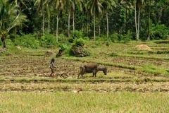 De Aziatische primitieve landbouw Royalty-vrije Stock Afbeelding