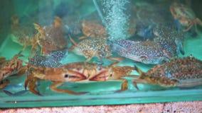 De Aziatische zeevruchtenmarkt, krab in het aquarium wacht op zijn koper, restaurant of reiziger, exotische schotels en stock videobeelden