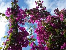 De bästa blommorna Arkivfoton