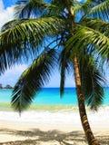 De baai Tobago van Englishman?s royalty-vrije stock afbeeldingen