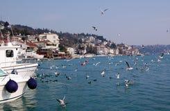 De baai van Bebek, Istanboel Royalty-vrije Stock Foto
