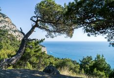 De Baai van de Zwarte Zee en Pijnboomboom op Krimbergen Royalty-vrije Stock Foto's