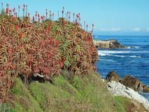 De baaiHeiligdom van Monterey Stock Fotografie