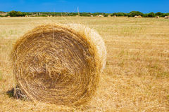 De baal van het strobroodje op de landbouwgrond Stock Fotografie