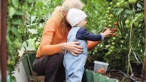 De baby en de grootmoeder plukken tomaten stock footage