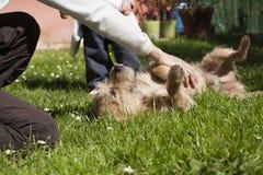 De baby petting hond van de vrouwenhand Stock Fotografie