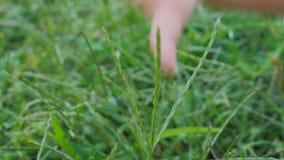 De baby` s hand voelt het gras Vingers van peuter wat betreft alles rond stock footage