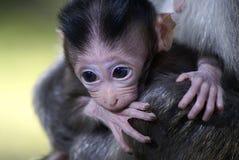 De baby van de aap het bijten hand stock afbeeldingen