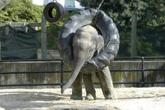 De baby van de olifant Royalty-vrije Stock Afbeeldingen