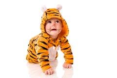 De baby van de tijger stock afbeelding
