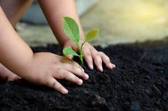 De Babyhand van het boomjonge boompje op de donkere grond het concept geïnplanteerde kinderenbewustzijn in het milieu royalty-vrije stock foto's
