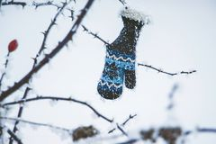 De babyhandschoen hangt op een tak van een wildernis toenam op de winter day_ stock fotografie