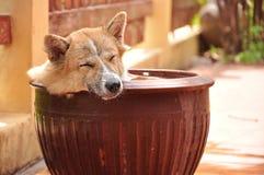 De babyhond van het slaapbad Stock Foto's