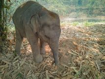 De babyolifant geniet van alleen speel royalty-vrije stock afbeeldingen