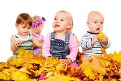 De babys groeperen zich in gele bladeren stock fotografie