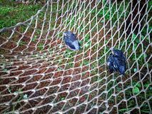 De babyvogels vielen uit een nest op een pijnboomboom stock foto