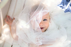 De babyzomer royalty-vrije stock foto's