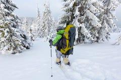 De Backpackervrouw loopt in bos Stock Afbeeldingen