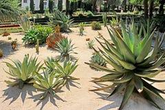 De Bahai trädgårdarna inkluderar områden med kakturs, palmliljor och agaves som växer i avskilda växtsängar Arkivfoto